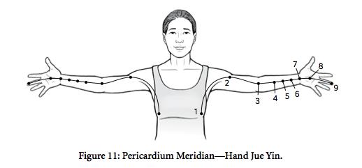 poq-pericardium